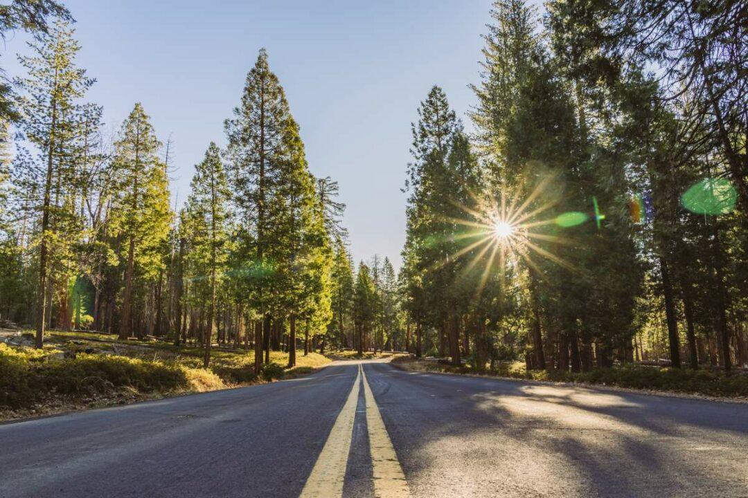 Straße mit zwei durchgehenden Streifen in einem grünen Wald bei Sonnenschein